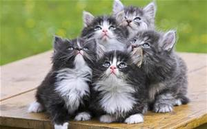 cute kittems