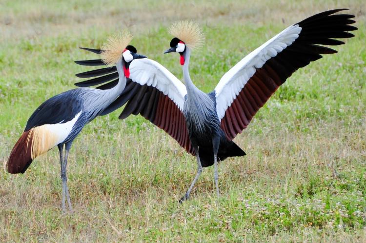 bird dance2