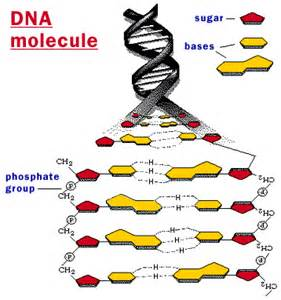 DNA two