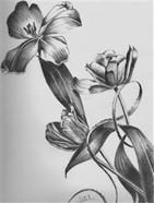 drawing biololgy 101