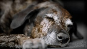 old dog #2